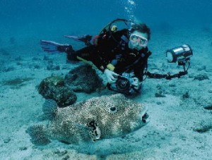 Fiji Tauchreise